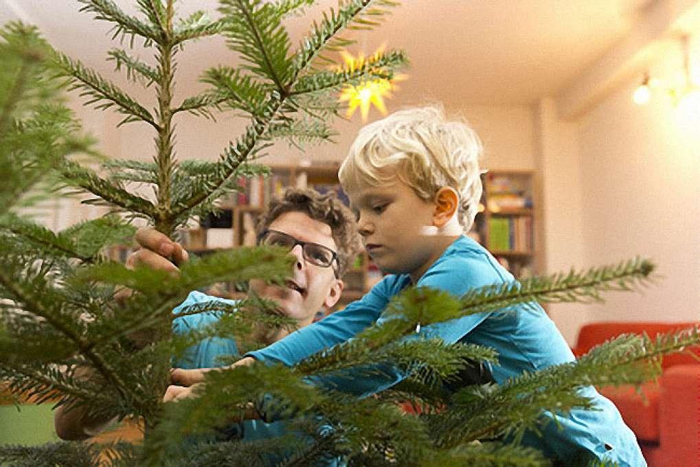 dittfach edeltannenhof isernhagen weihnachtsbaum lagern. Black Bedroom Furniture Sets. Home Design Ideas