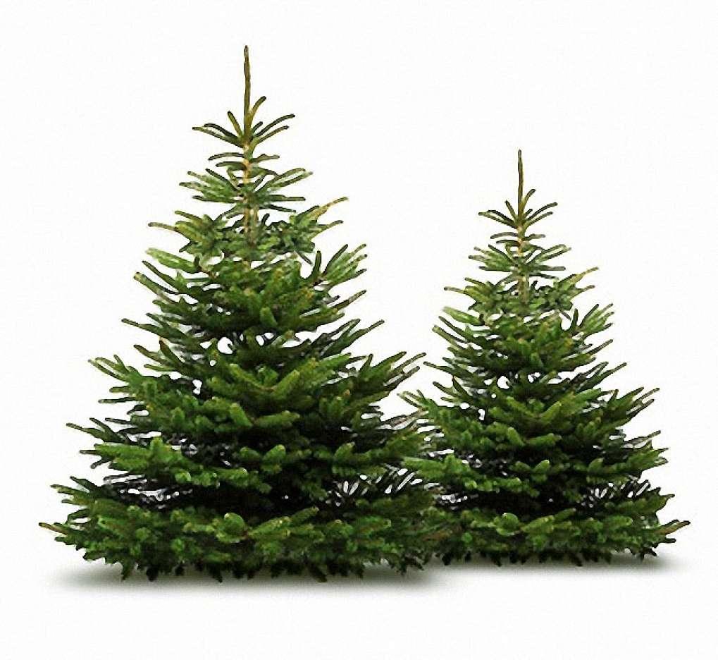 Gutschein Weihnachtsbaum.Dittfach Edeltannenhof Isernhagen Edeltannenhof Dittfach Seit